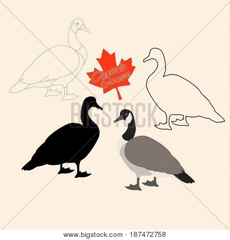 Canadian goose vector illustration style Flat black silhouette