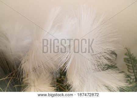 White Grass Flower Decorated On Wall stock photo