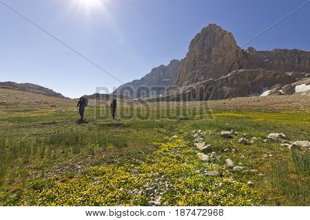 hiker standing on colorful yellow flowers and green grass with stones, and big rock on Background in Turkey mountains, Aladaglar