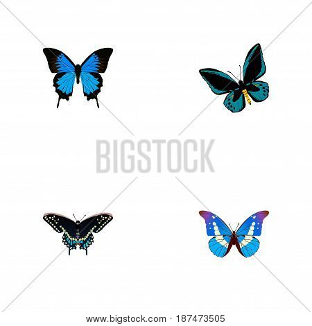 Realistic Morpho Hecuba, Demophoon, Bluewing And Other Vector Elements. Set Of Butterfly Realistic Symbols Also Includes Morpho, Moth, Blue Objects.