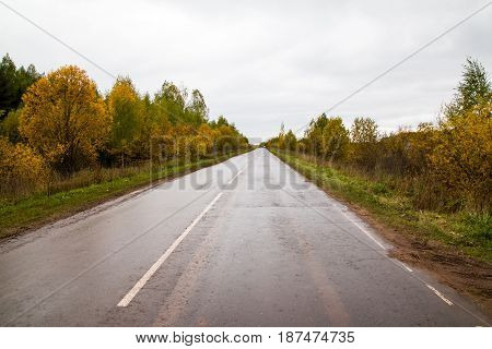Road And Yellow Trees In Autumn