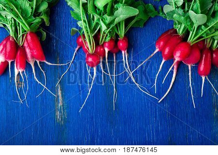 Fresh Radish On Blue Background. Top View. Three Bunches Of Small Radishes.