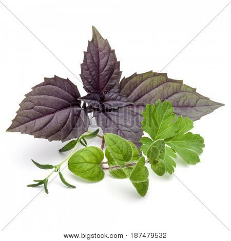 Fresh herb leaves variety isolated on white background. Purple dark opal basil, oregano, thyme, parsley.