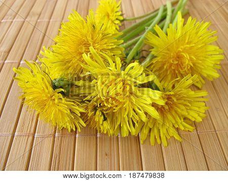 Bouquet of yellow dandelion flowers wild herbs