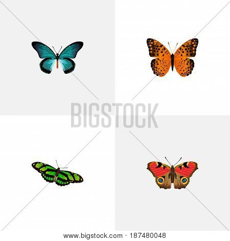 Realistic Green Peacock, Danaus Plexippus, American Painted Lady And Other Vector Elements. Set Of Moth Realistic Symbols Also Includes American, Blue, Green Objects.