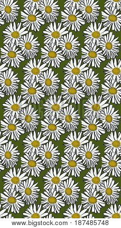 Vector seamless pattern with chamomile on green background
