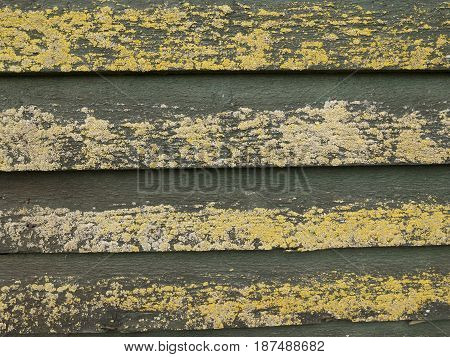 Close up of weathered wooden planks covered with moss forming the side of a windmill