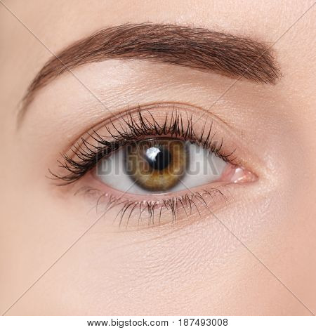 closeup of brown eye. Beautiful macro image of female eye with makeup. Perfect shape of eyebrow. Cosmetics and make-up. Fashion natural eye visage. Hazel eye looking at camera