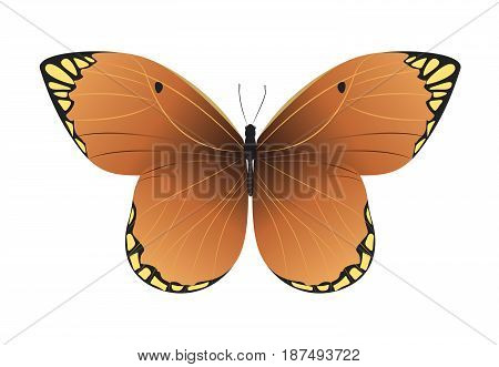 Isolated beautiful butterfly on white background. Orange and yellow colors.