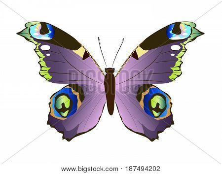 Isolated beautiful butterfly on white background. Violet colors.