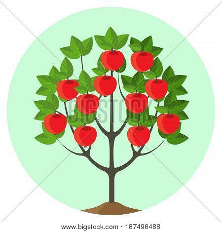 Apple tree with ripe fruits vector illustration in round button. Summer fruit plant with leaves and healthy organic apples. Gardening concept