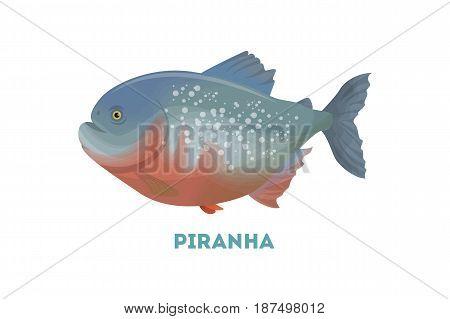 Isolated piranha fish on white background. Dangerous wild exotic fish.