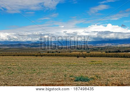 Golden Cold Dry Winter Landscape And Mountains