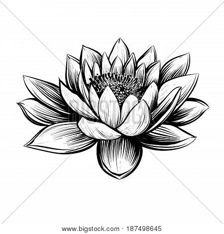 Vector water lily. Lotus illustration. Black and white graphic art line. Linocut style.