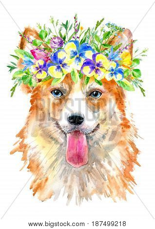 Pembroke Welsh Corgi portrait.Greeting card of a dog and floral wreath.House pet.Watercolor hand drawn illustration.White background.