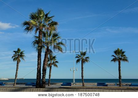 Palm trees on the sea front in Malaga, Costa del Sol, Andalusia, Spain.