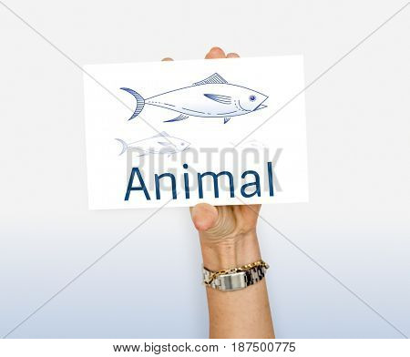 Animal fish food meal aquatic