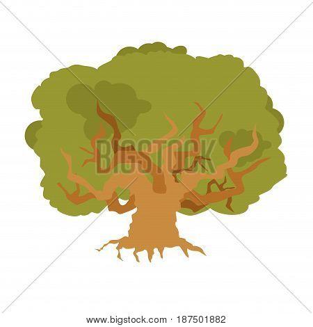 Oak Isolated. Large Old Tree. Huge Bush