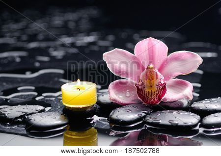 orchid with black stones candle on wet background