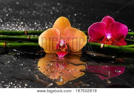Orange and red orchid with black stones ,grove on wet background