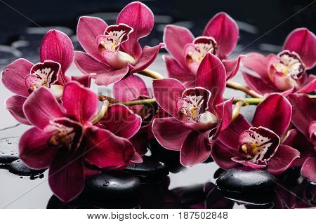 Lying on red bouquet orchid with black stones on wet background