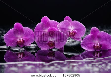 still life with black stones and pink orchid