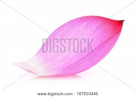 Closeup of lotus petal isolated on white background