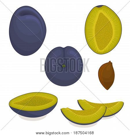 Vector plum. Set of whole, sliced, half of plums isolated on white background. Illustration.