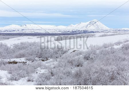 Winter landscape with snow covered trees at Dimmuborgir Lake Myvatn, Iceland