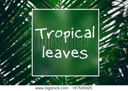 Text TROPICAL LEAVES on green foliage background