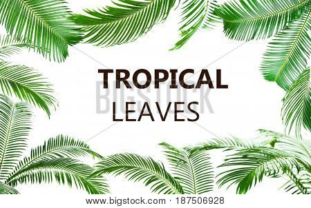 Text TROPICAL LEAVES and green foliage on white background