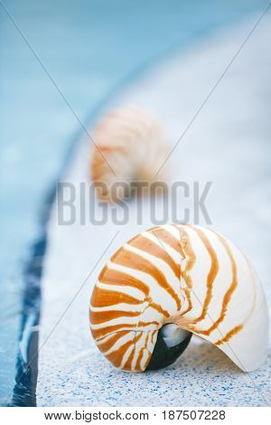 nautilus shell at resort swimming pool edge,  shallow dof