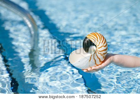 nautilus seashell in child hands with crystal blue water background, shallow dof