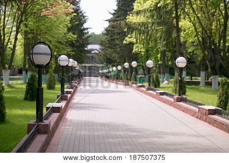 Green city park in sunny summer day.