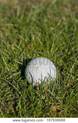 Close up of dirty golf ball on green grass background.
