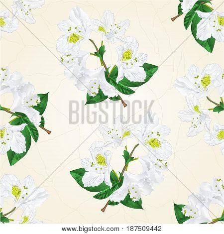 Seamless texture white rhododendron twig mountain shrub vintage hand draw vector illustration