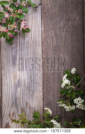 Spring Flowers hawthorn on background of old vintage blue board