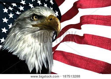 American eagle. National symbol for USA. East eagle on the american flag.