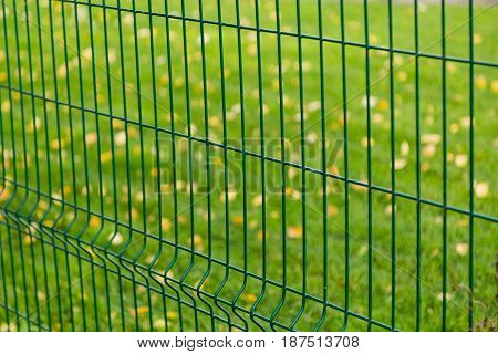 Metal green fence on the background of grass and yellow leaves