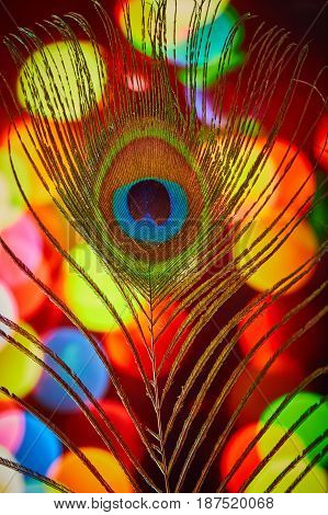 Peacock Feather With A Colorful Background Macro