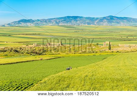 VOLUBILIS ,MOROCCO - APRIL 7,2017 - Nature near ruins of Volubilis in Morocco.Volubilis is a partly excavated Berber and Roman city in Morocco situated near the city of Meknes.