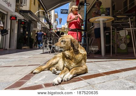HERAKLION GREECE - JULY 09 2016: Crete. Stray dog near a cafe on a shopping street in the historic center of the city. Heraklion - the largest city on the island.
