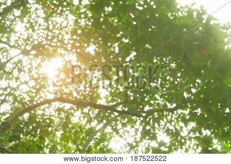 Abstract green light bokeh of tree nature background