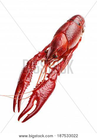 Red boiled crawfish isolated on a white background