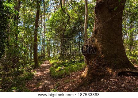 Hiking Path In Tropical Rain Forest