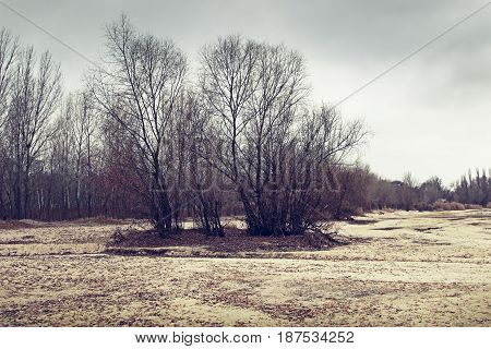 Winter landscape with trees. Filtered image. Nature background