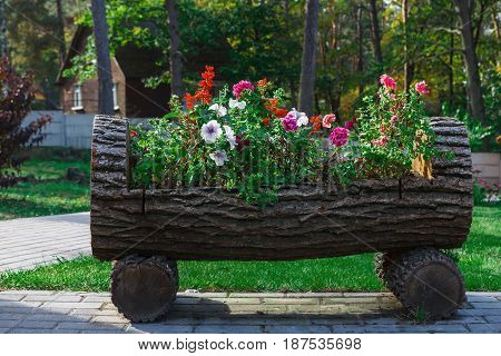 Outdoor landscape design - garden bed with flowers. Original flowerbed in wooden log, formal garden