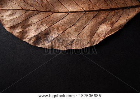 Autumn leaf on black background, close up crop, copy space