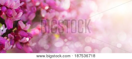 Sakura branch, pink on the background of a bokeh