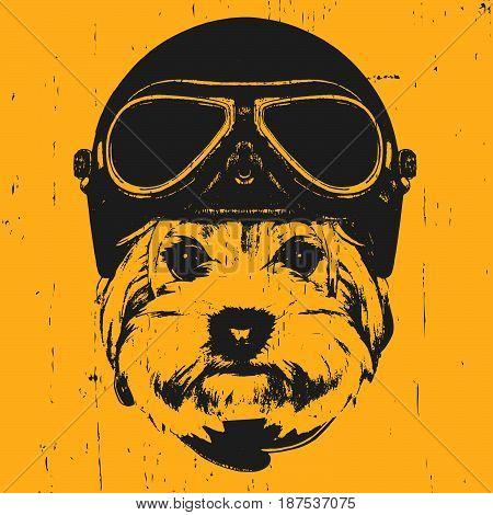 Portrait of Yorkshire Terrier with Vintage Helmet. Vector